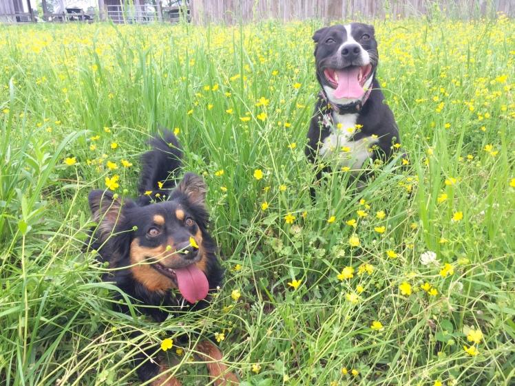 Abby and Louie2