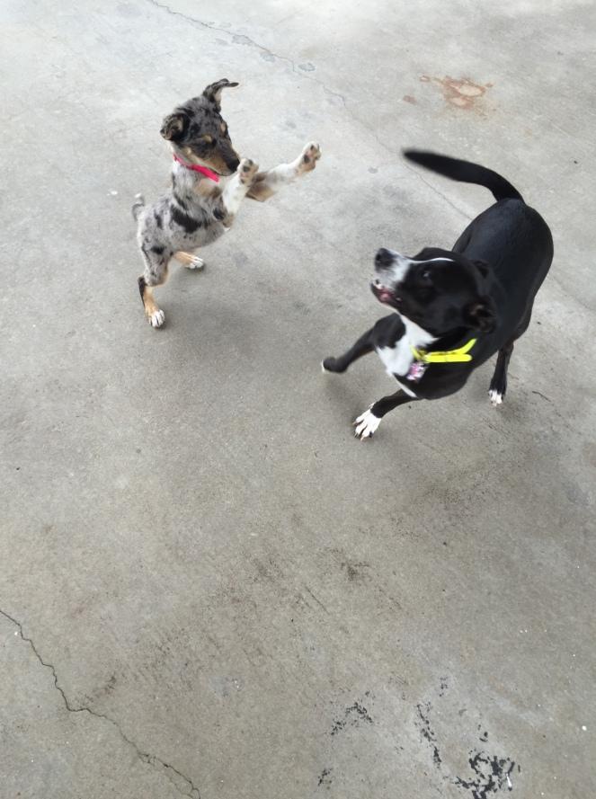 Dixie & Abby 2