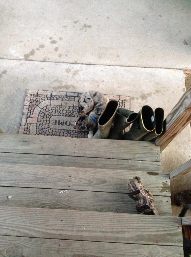 Dixie Sleeping Under Porch