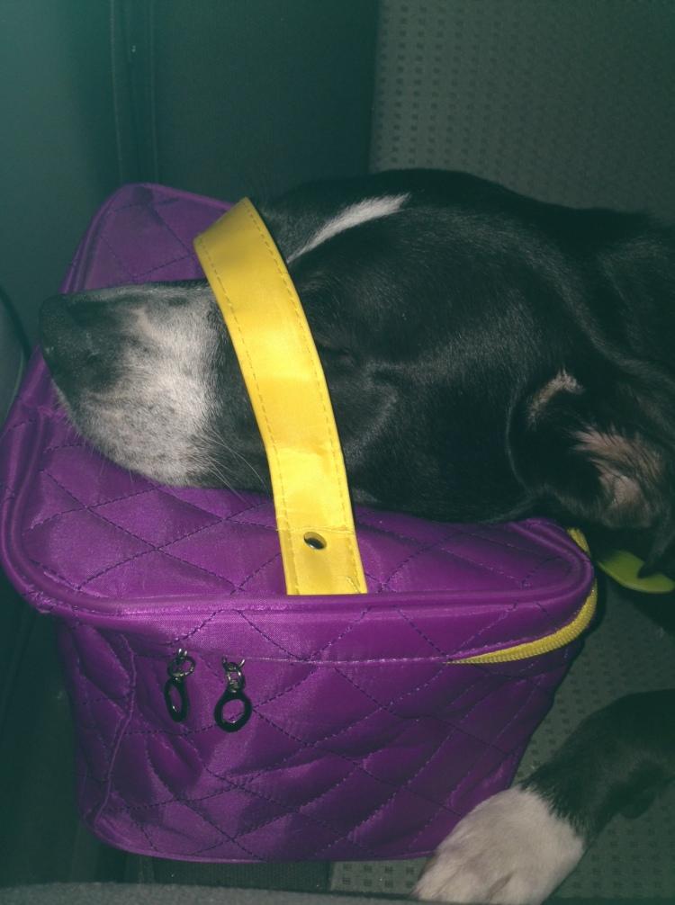 Abby Sleeping