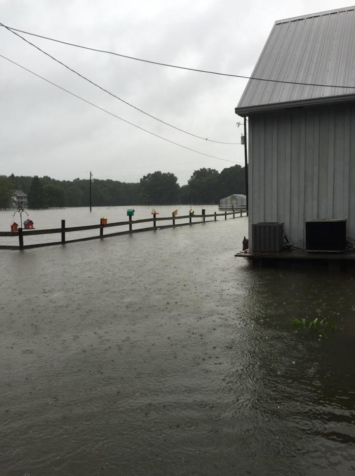 Flooded Pasture 2