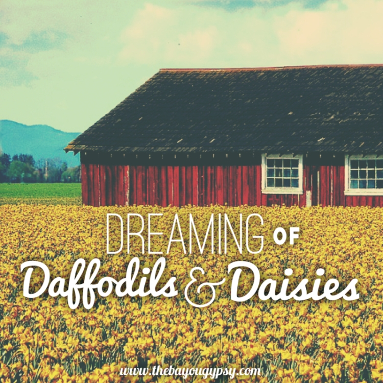 dreaming-of-daffodils-and-daisies