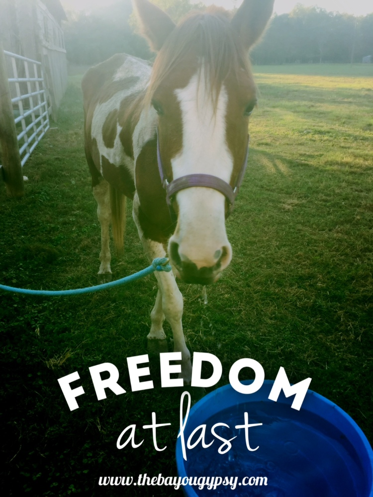 freedom-at-last-graphic