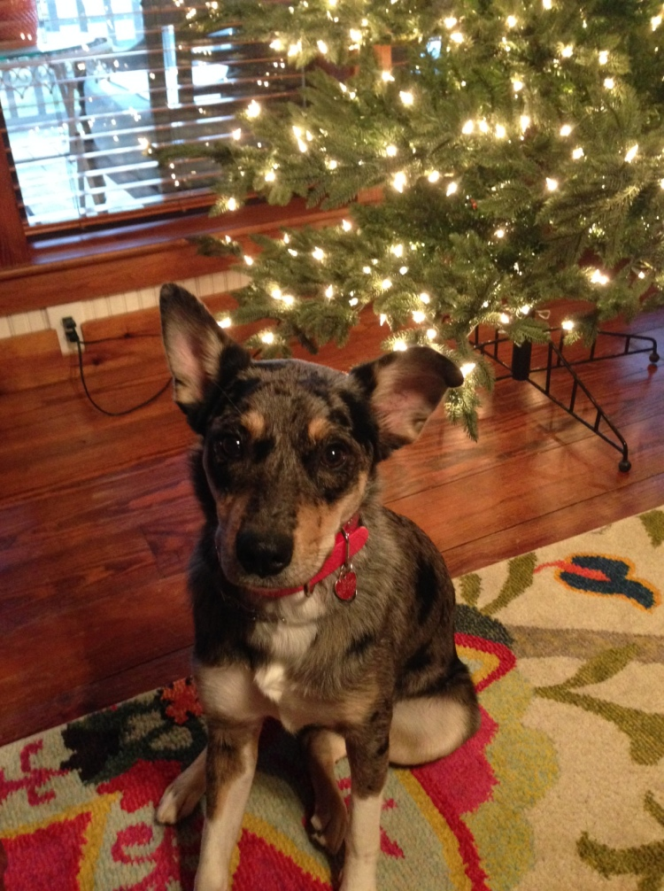 dixie-approves-the-tree