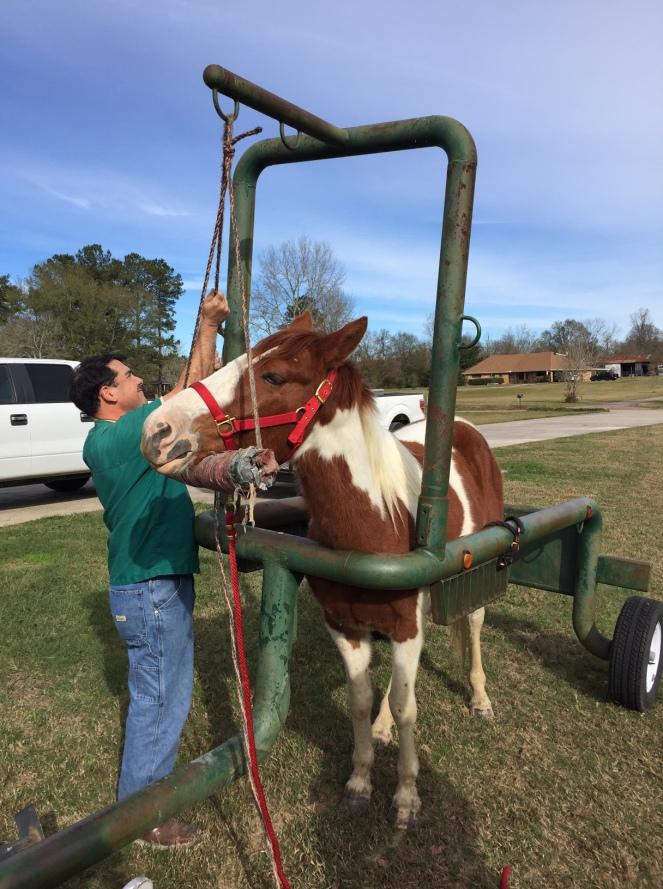 horse-trailer-3