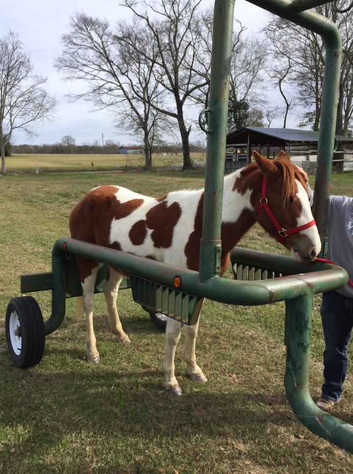horse-trailer