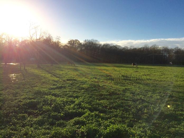 sun-shining-on-the-pasture