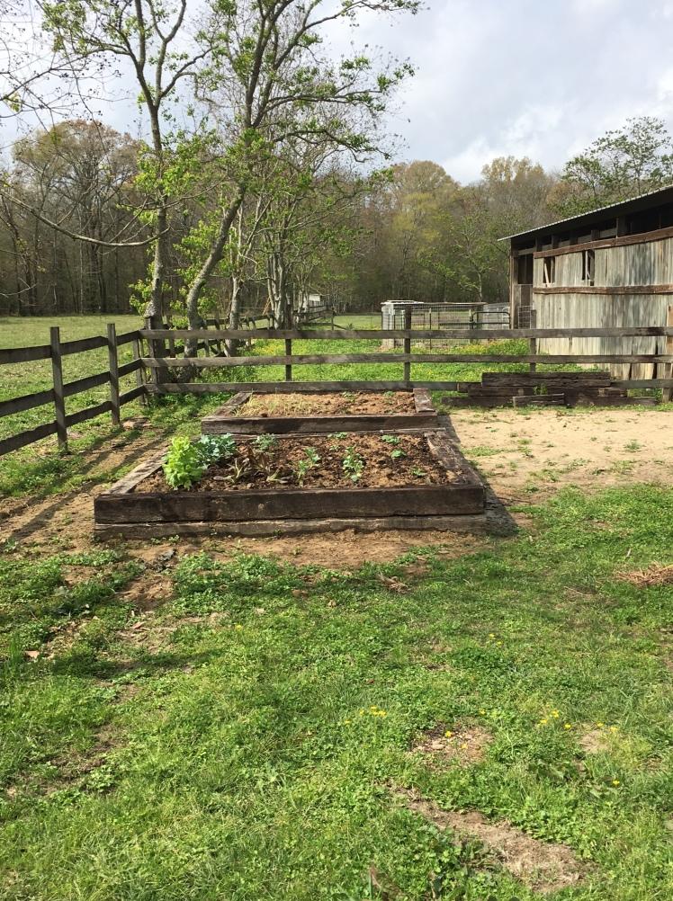 raised-garden-bed-5