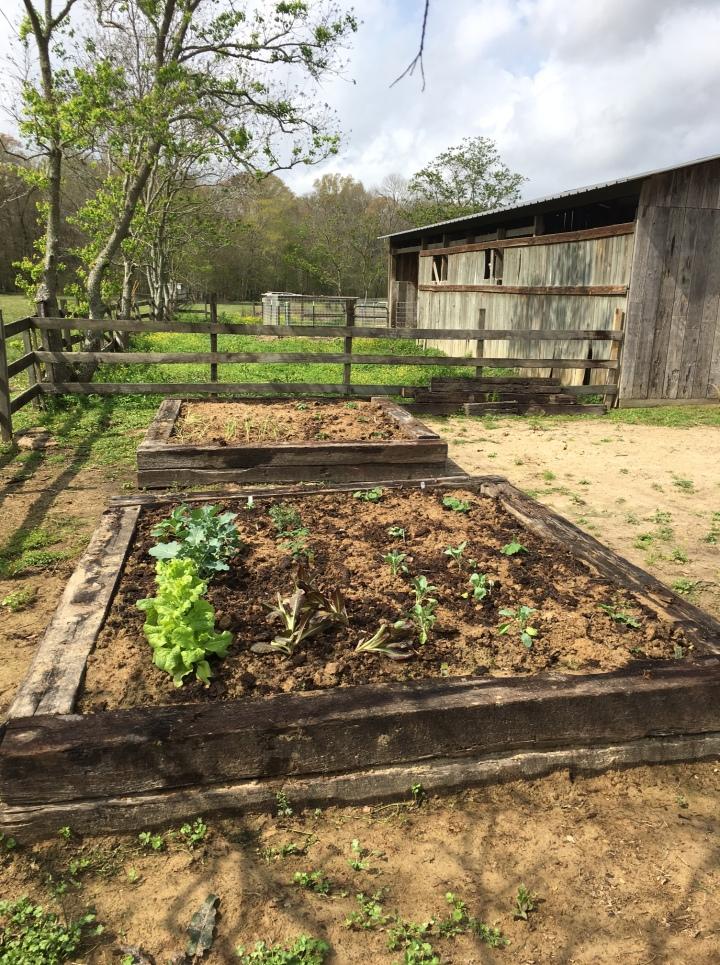 raised-garden-bed-6