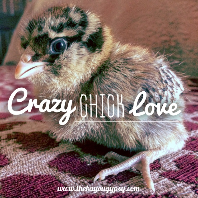 Crazy Chick Love Graphic