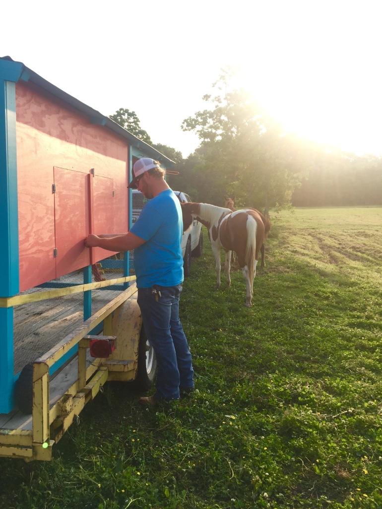 Horses' Encounter 11
