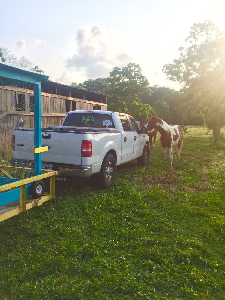 Horses' Encounter 4