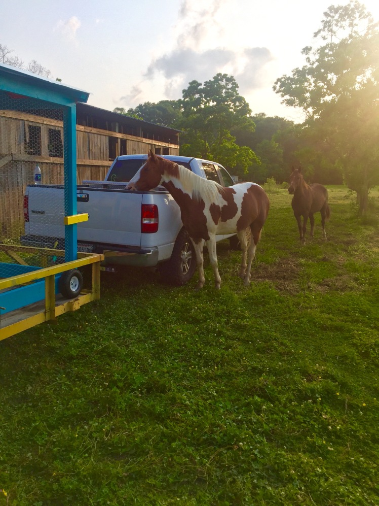 Horses' Encounter 6