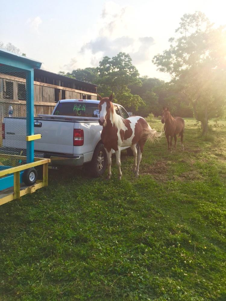 Horses' Encounter 7