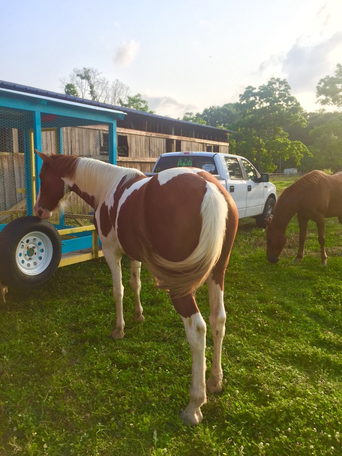 Horses' Encounter 9