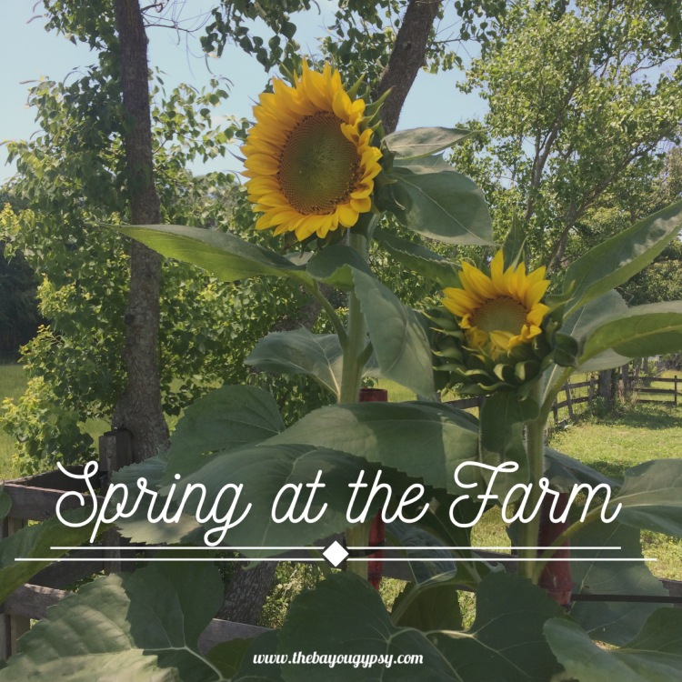 Spring at the Farm Graphic