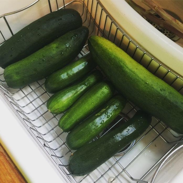 zucchini 2