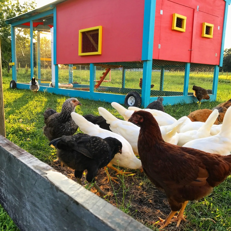 Afternoon foraging