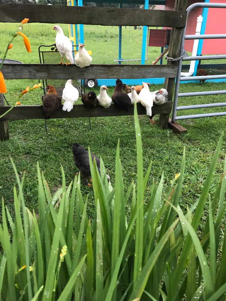 Afternoon perching