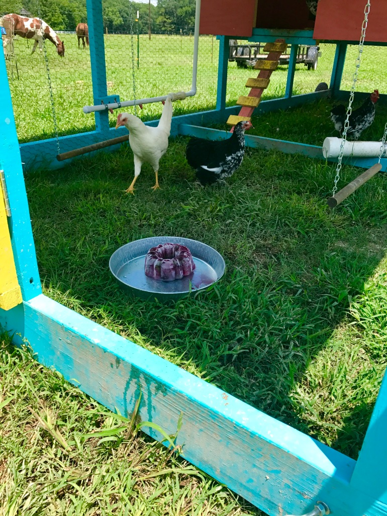 Chickens with freeze treat