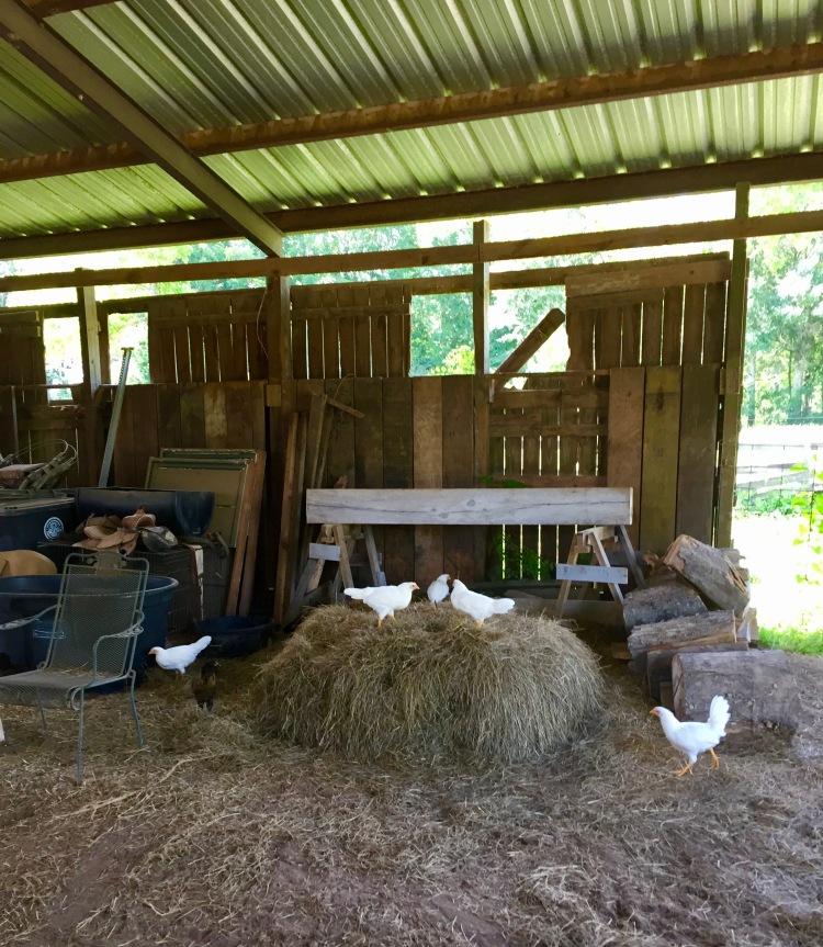 Claim the hay bale