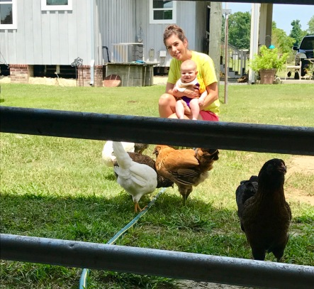 Cooper meeting Chickens 1