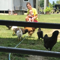 Cooper meeting Chickens 2