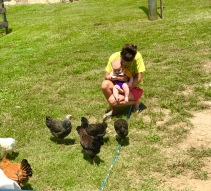 Cooper with Chickens 3