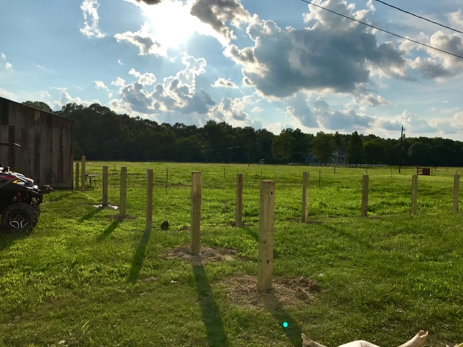 Day 2 Fence Progress 2