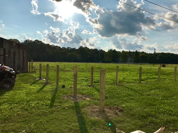 Day 2 Fence Progress 2