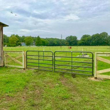 Day 5 Fence Progress 7