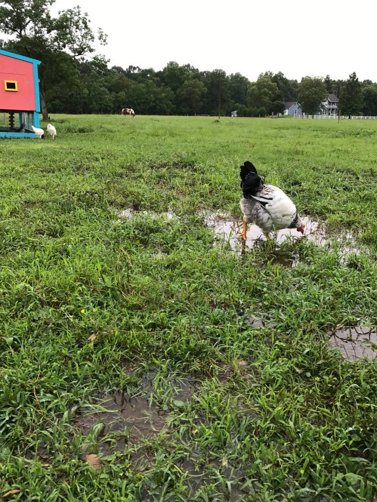Drinking from Puddles