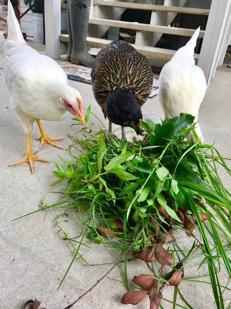Forage on Weeds 1