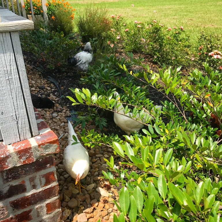 Foraging Front Beds