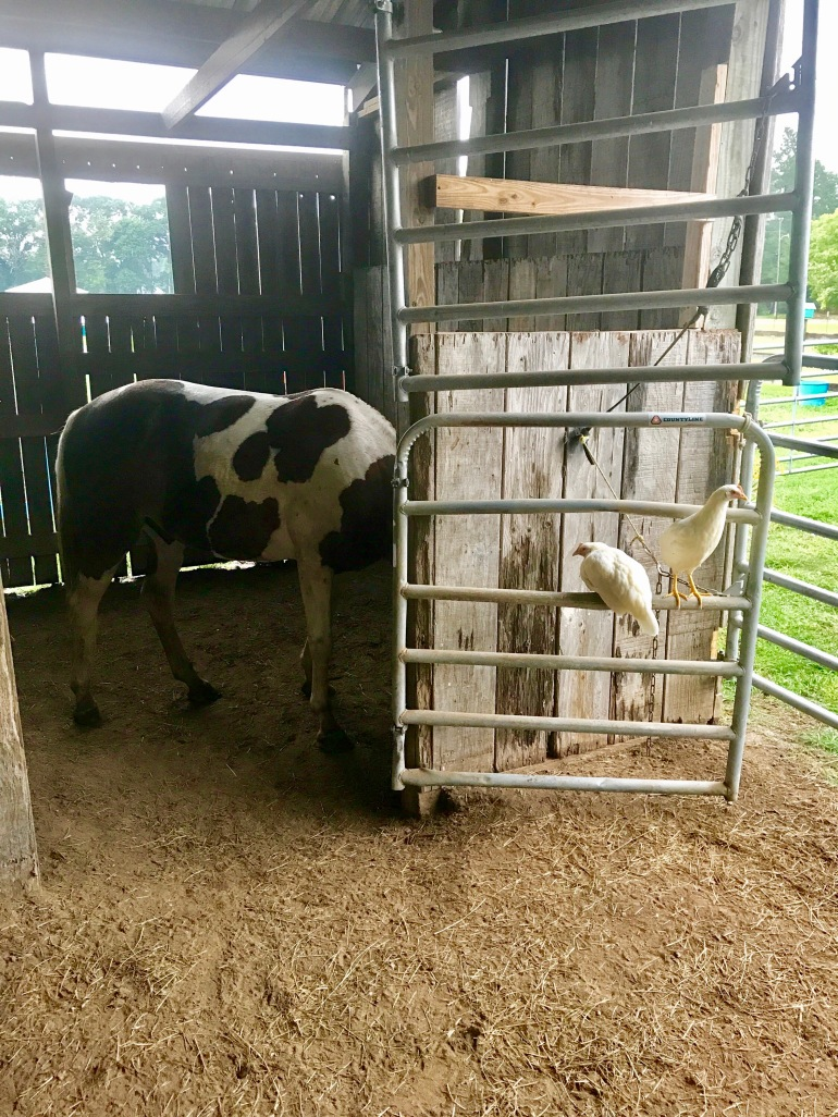 Freedom and Spice Girls