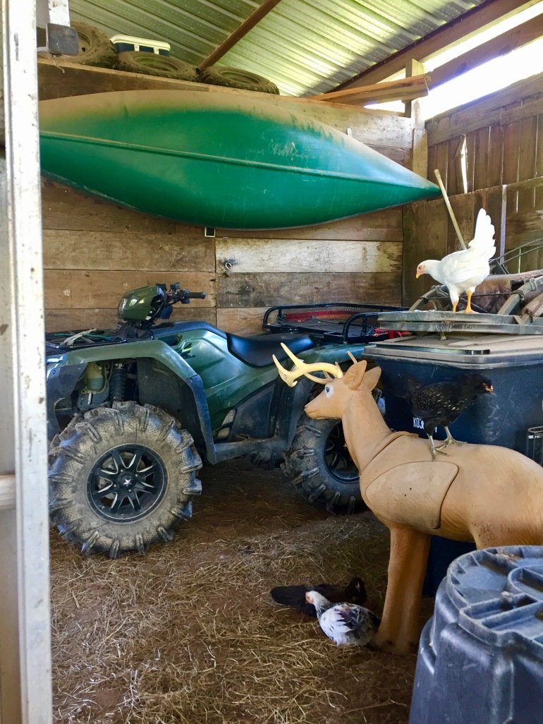 Hanging out in the barn