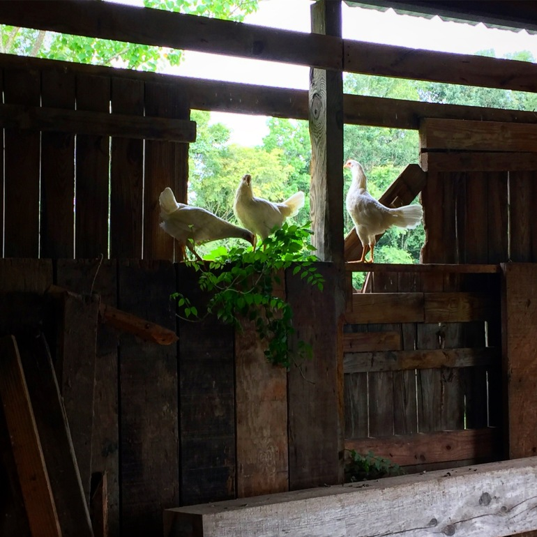 High perching