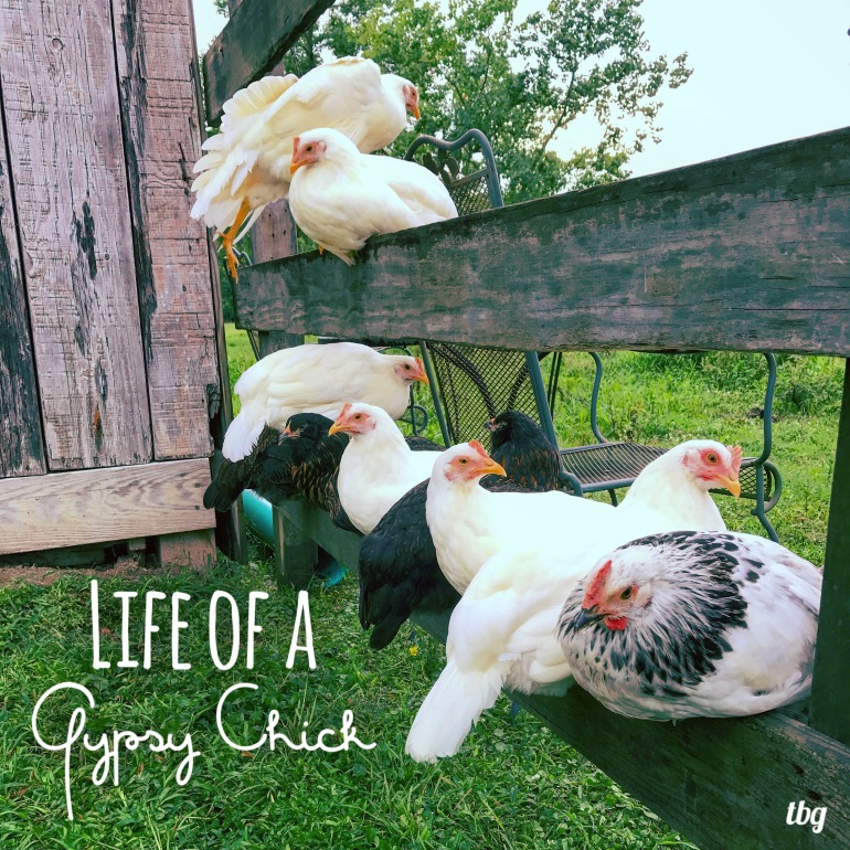 Life of a Gypsy Chick