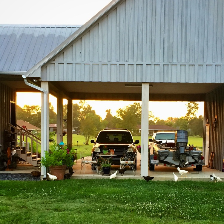 Morning foraging by carport
