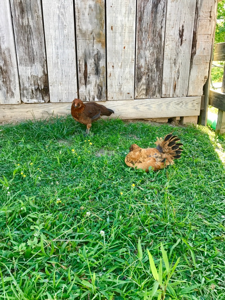 Relax with your bestie