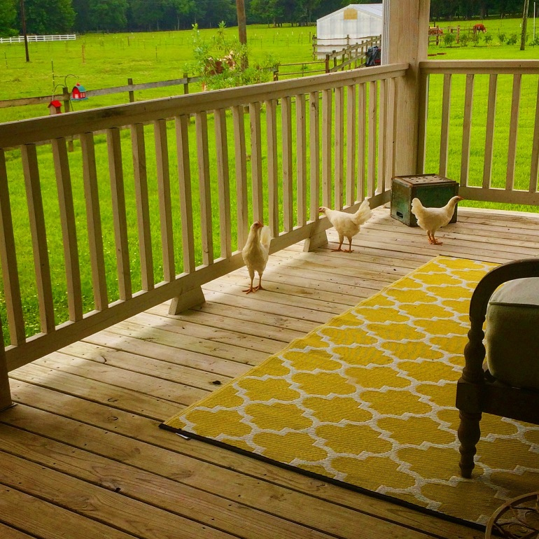 Spice Girls on Back Porch