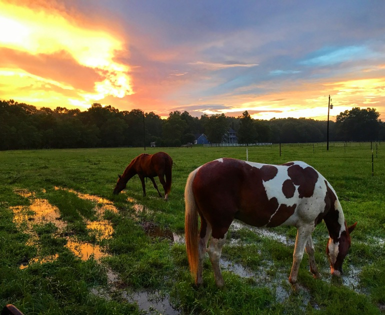 Temporary Horse Fence and Sunset