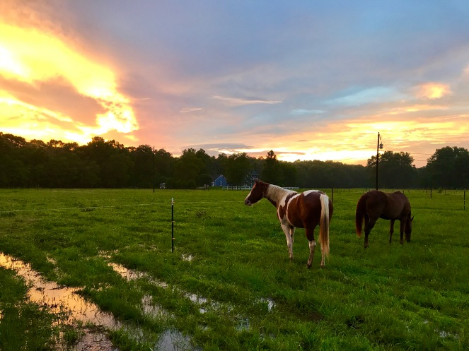 Temporary Horse Fencing and Sunset 2