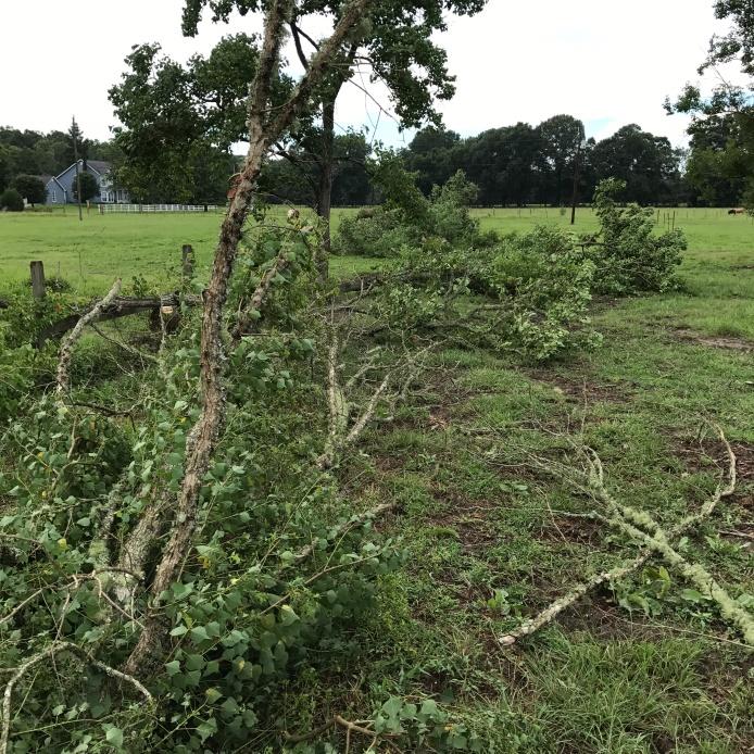 Tree Demo 4