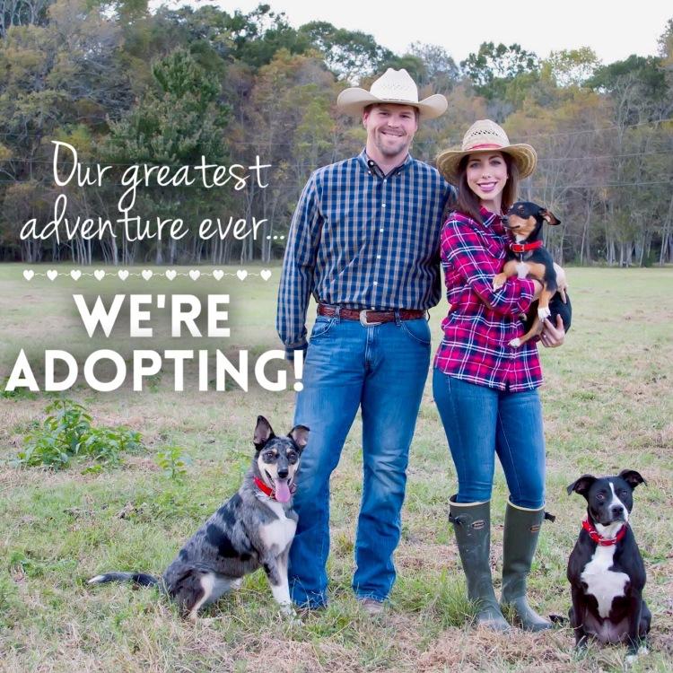 We Are Adopting Graphic