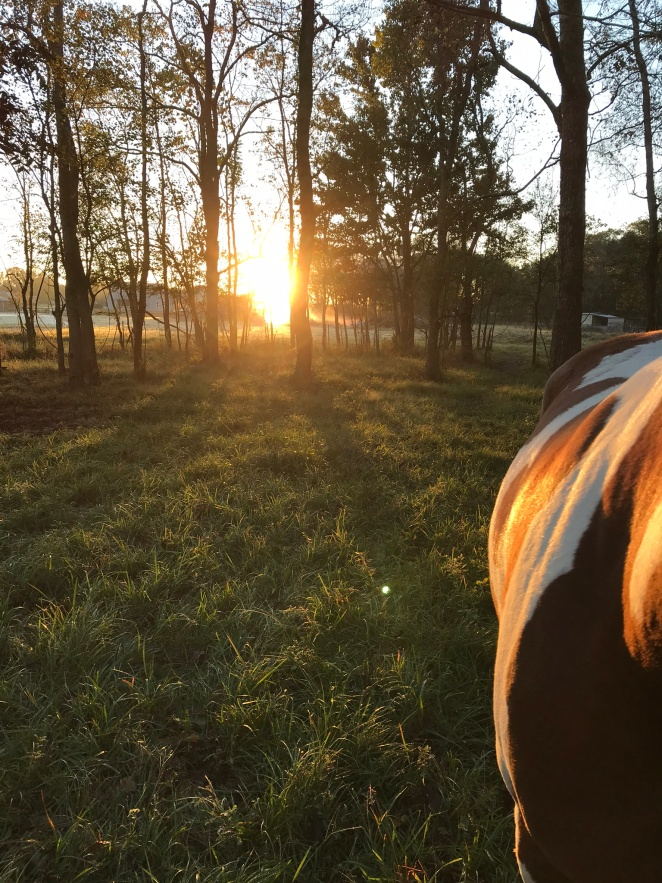 Freedom - Sunset