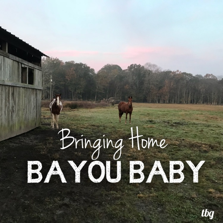 Bringing Home Bayou Baby Graphic