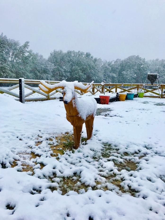 Deer Target in Snow