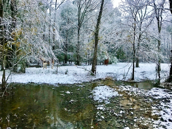 Horses in Back Pasture 2