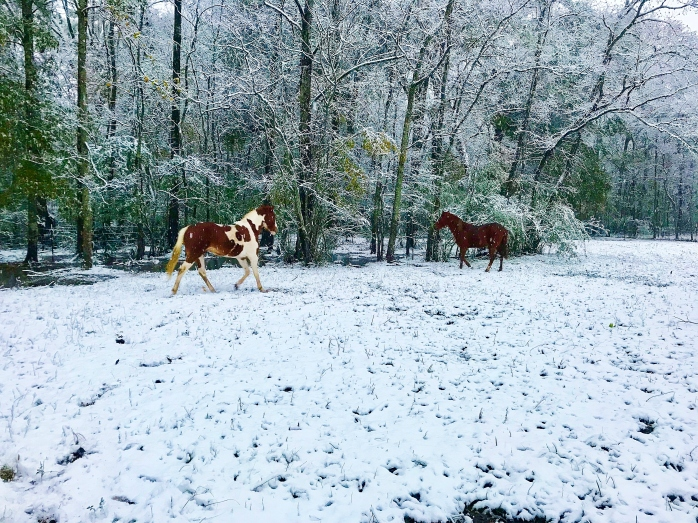 Horses in Back Pasture 3